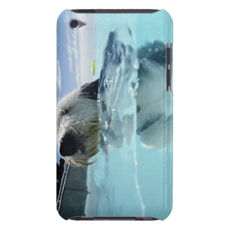 Dog Swimming in a Swimming Pool Barely There iPod Cover