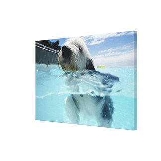 Dog Swimming in a Swimming Pool Canvas Print