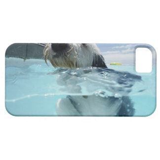 Dog Swimming in a Swimming Pool iPhone 5 Cases