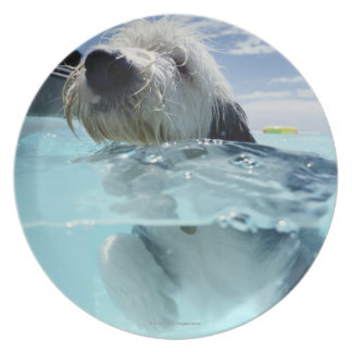 Dog Swimming in a Swimming Pool Plate