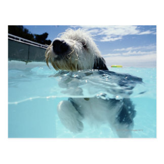 Dog Swimming in a Swimming Pool Postcard