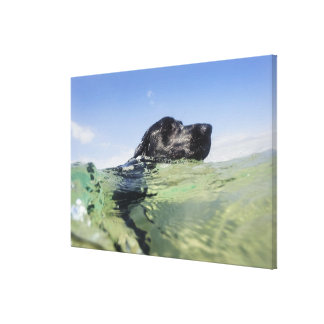Dog swimming in water canvas print