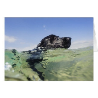 Dog swimming in water card