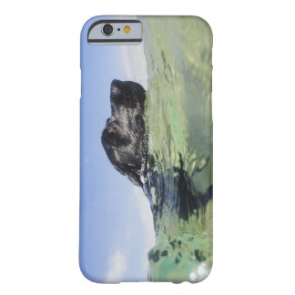 Dog swimming in water barely there iPhone 6 case