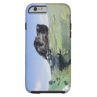 Dog swimming in water tough iPhone 6 case