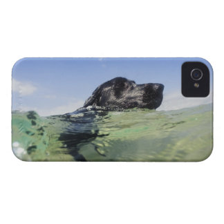 Dog swimming in water Case-Mate iPhone 4 case