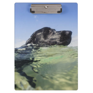 Dog swimming in water clipboard