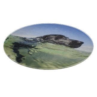 Dog swimming in water cutting board