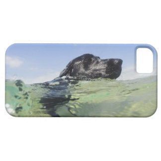 Dog swimming in water iPhone 5 covers