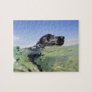Dog swimming in water jigsaw puzzle