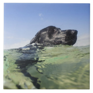 Dog swimming in water large square tile