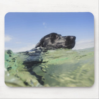 Dog swimming in water mouse pad