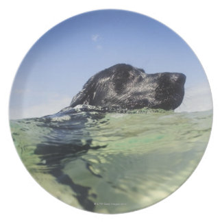 Dog swimming in water plates