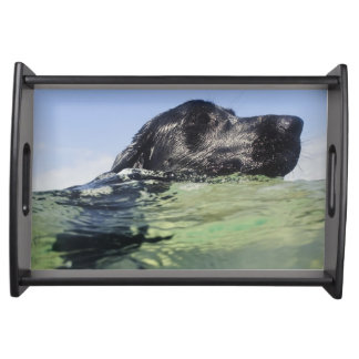 Dog swimming in water serving tray