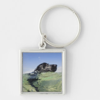 Dog swimming in water Silver-Colored square key ring