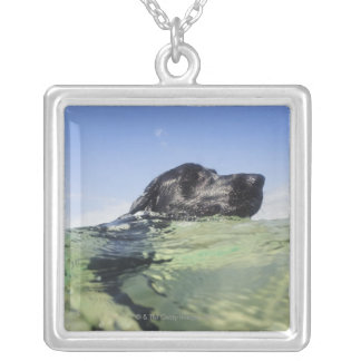 Dog swimming in water silver plated necklace