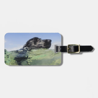 Dog swimming in water tag for bags