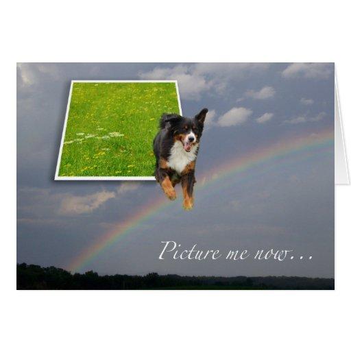 Dog sympathy Rainbow card