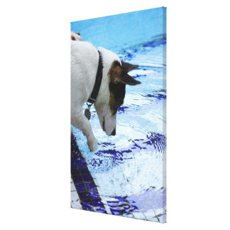 Dog touching water at the swimming pool canvas print