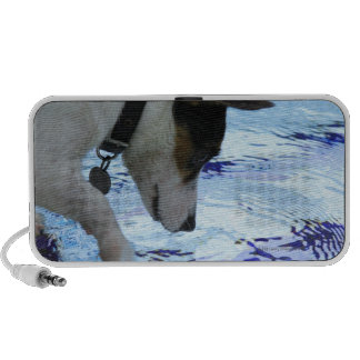 Dog touching water at the swimming pool notebook speaker
