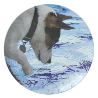 Dog touching water at the swimming pool plate