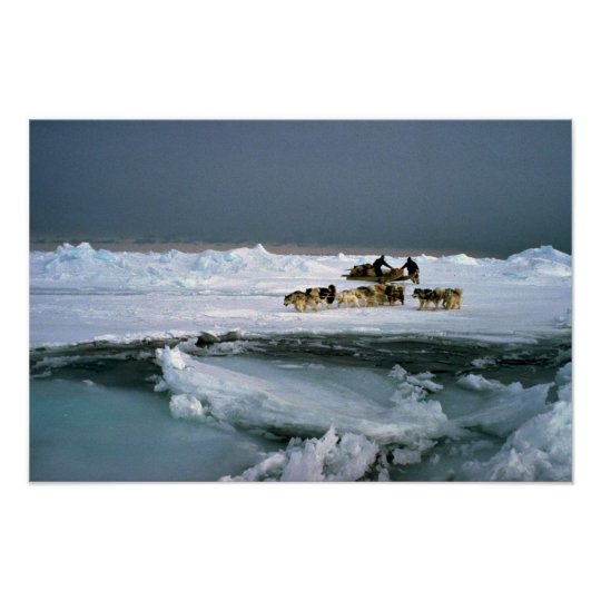 Dog travel on ice, Ellesmere Island, Northwest Ter Poster