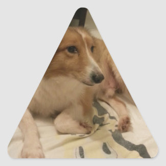 dog triangle sticker