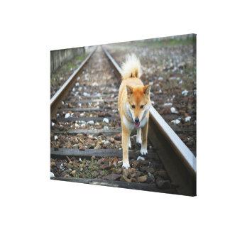 Dog walking track canvas print