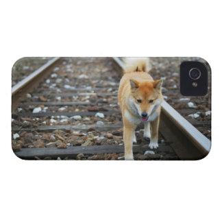 Dog walking track iPhone 4 Case-Mate case