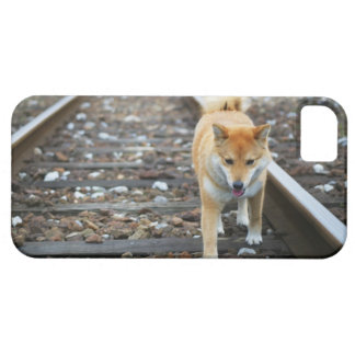 Dog walking track iPhone 5 covers