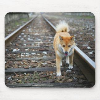 Dog walking track mouse mat