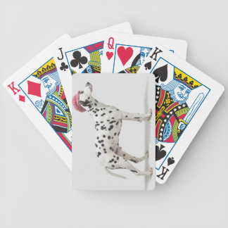 Dog wearing a hat bicycle playing cards