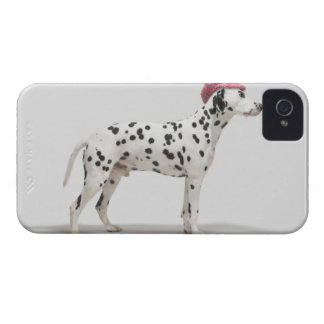 Dog wearing a hat iPhone 4 Case-Mate case