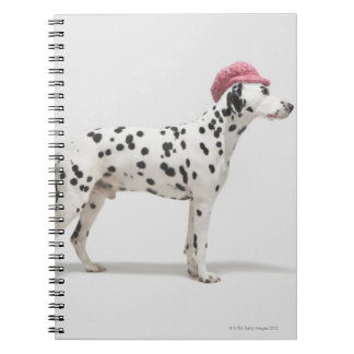Dog wearing a hat notebooks