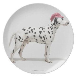Dog wearing a hat party plates
