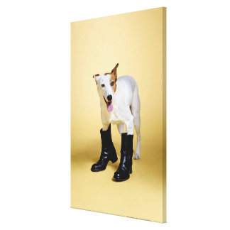 Dog wearing boots canvas print