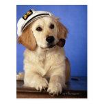 Dog wearing cap, holding smoke pipe postcard