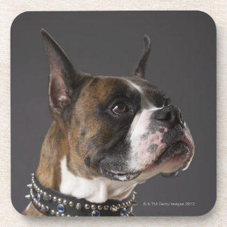 Dog wearing collar, looking away coasters