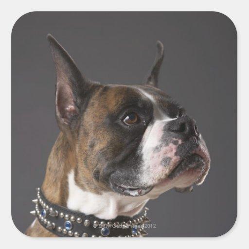 Dog wearing collar, looking away square sticker