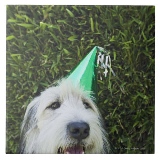 Dog wearing party hat tile