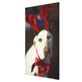 Dog wearing reindeer antlers canvas print