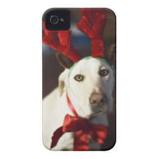 Dog wearing reindeer antlers iPhone 4 case