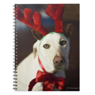 Dog wearing reindeer antlers notebooks