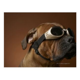 Dog wearing sunglasses 2 postcard