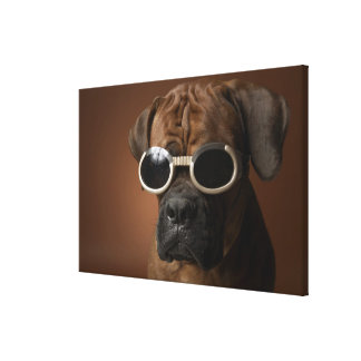 Dog wearing sunglasses canvas print