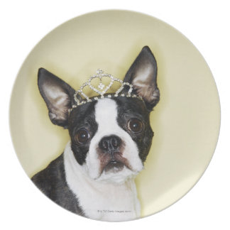 Dog wearing tiara plate