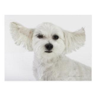 Dog winking postcard