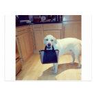 Dog with a handbag postcard