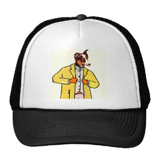 Dog with a new coat cap