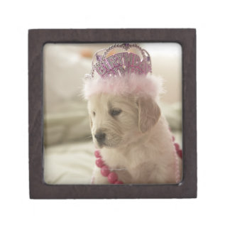 Dog with decorations on bed premium gift box